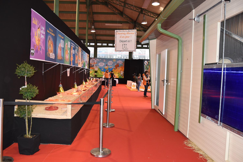 Citédia Event Halle Martenot Toqués De Janzé (3)